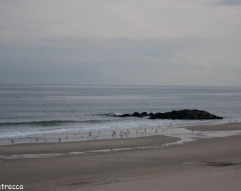 long branch beach with seagulls photo print photography 11x14