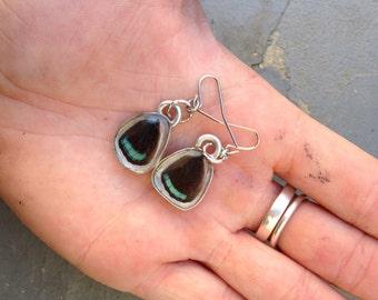 """Real reverse """"98"""" butterfly wing earrings."""