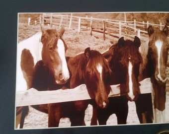 Horses in sepia matted photograph