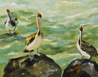 Original watercolor painting of a trio of Pelicans standing on big coquina rocks among the the ocean waves.