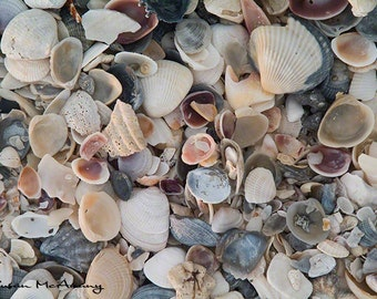 Shell Photo, Texture Overlay, Instant Download, Photoshop Overlay, Scrapbook, Stock Photo, Digital Download, Banner Clipart, Blog Banner