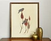 Vintage Bird Print William Zimmerman Signed Lithograph Eastern Bluebird Avian Art Print