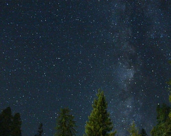 """astrophotography print / nature redwood tree forest Milky Way star sky art decor / blue black large wall art / """"redwoods starry night"""""""
