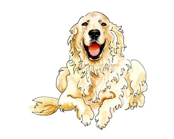 Anglais cr me golden retriever heureux mignon animal portrait - Dessin golden retriever ...