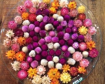 Dried Flowers, Strawflower, Fall Decor, Strawflowers, Gomphrena, Flowers