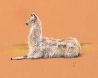 Llama Drawing/ original pastel/ cute llama/ naturalistic drawing/ llama gift/ wildlife art/ orange gift/ wool