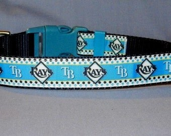 Tampa Bay Rays collar