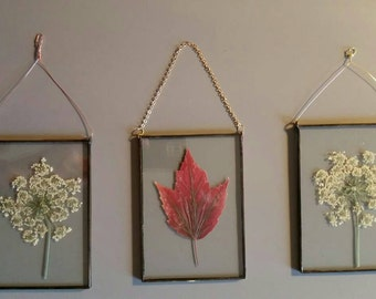 Pressed Queen Annes Lace wall hanging with brass encasing / dried flower art / unique wall hanging