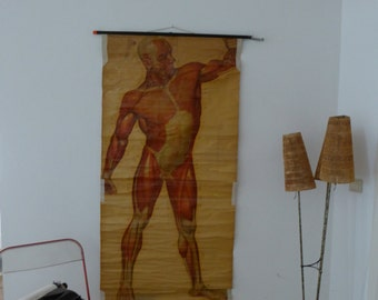 Male Muscles Chart Vintage - Large Naked Man Anatomy Poster - Deutsches Hygiene Museum  Circa 1950s
