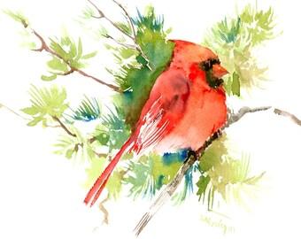 Northern Cardinal Bird 12 X 9 in, original watercolor painting
