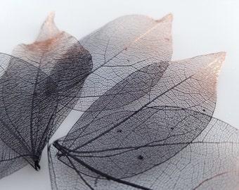Black skeleton leaves, black and copper metallic waxwood leaf skeletons, set of 25 skeleton leaves, with copper tips
