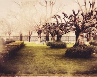 Vintage Tree Garden Fine Art Photography Print, Twisted Tree Landscape Art, Home Decor Print- Twisted Garden Print