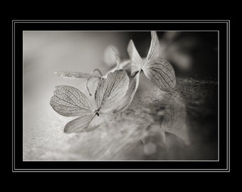 Black & White Flower Photography, Hydrangea Photograph, Horizontal Wall Art, Still Life Floral Macro Photo, Fine Art Nature Photo Prints