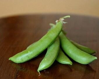 Sugar Snap Peas. Crunchy edible pod, sweet pea 40+ seeds