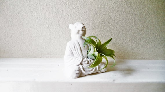 Meditating Buddha squirrel, Zen animal planter, Buddha planter, air plant holder,