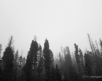 Black and White Nature Photograph, Abstract Nature Art, Black and White Abstract Wall Art, Landscape Photograph, Montana Decor, Western Art