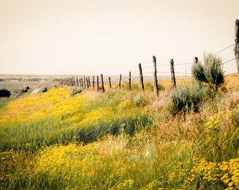 Landscape Photography, fence row, wildflowers, rustic fence posts, spring flowers, yellow, red, gray, Rustic Home Decor, Fine Art Print