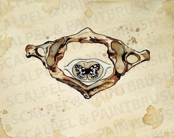 "NEW 11""x14"" Metamorphosis - Atlas, butterfly, creative anatomy, illustration, chiropractic art, watercolor, print"