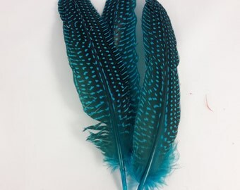 10 pc's x 20cm Turquoise Guinea Spotted Feathers
