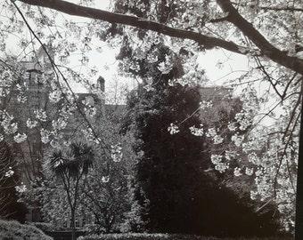 Photography, Kensington Gardens, London