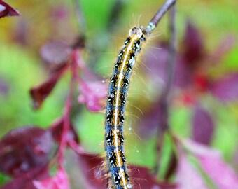 Caterpillar in the Dew