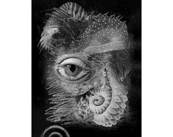 Sea Life #16, Inkjet print  7x9 image on 11x14 archival paper