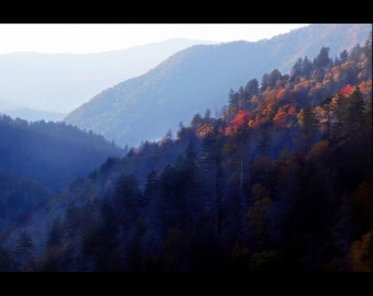 Last Rays of Sunlight Hit Tree Tops in Smokey Mountains