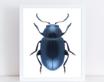 INSTANT DOWNLOAD | Metallic Beetle Wall Art | Insect Printable Art | Nature Wall Art | Insect Art Print | Nursery Art Print | Home Decor |