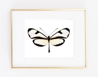 Butterfly Printable Art | Insect Printable Art | Nature Wall Art | Butterfly Art Print | Nursery Art Print | Home Decor | Butterfly Wall Art