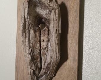 Knot of Wood Small Minimalist Found Object Nature Woodland Wall Hanging Art by Tree Pruitt