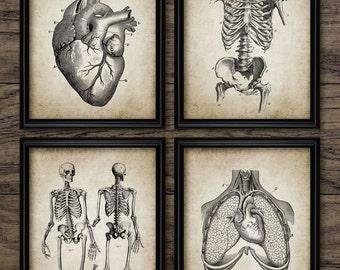 Human Anatomy Print Set Of 4 - Human Anatomy - Vintage Human Anatomy Illustration - Set Of Four Prints #372 - INSTANT DOWNLOAD