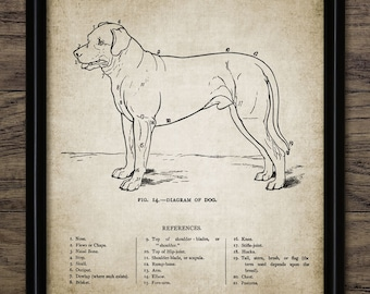 Vintage Dog Anatomy Print - Dog Anatomy Illustration - Dog Wall Art - Printable Art - Single Print #692 - INSTANT DOWNLOAD