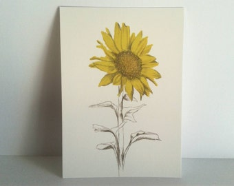 postcards flowers illustrated