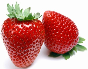 Eversweet Everbearing Strawberry 10 Bare Root Plants - Super Sweet