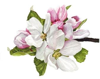 Apple Blossom Original Watercolor Art
