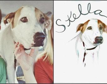 Personalized Senior Dog Portraits