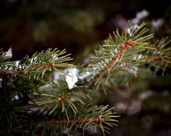 Pine Needles Print