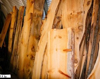 Eastern White Pine Live Edge Wood Slabs