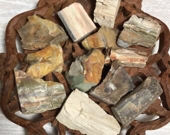 Petrified Wood, Beautiful Colorful Petrified Wood, Fossilized Wood, Agatized Wood, Fossils, Ancient Knowledge
