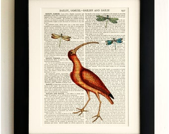 ART PRINT on old antique book page - Pink Flamingo, Dragonflies, Vintage Upcycled Wall Art Print Encyclopaedia Dictionary Page, Fab Gift!