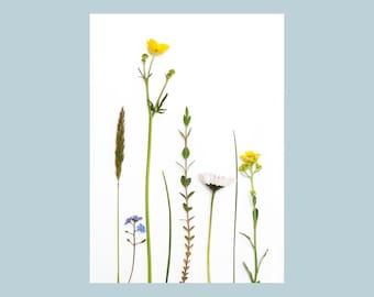 Postcard Flowers Set
