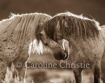 "Horse photograph. Horse print,Wild Horses, Mustangs, Horse Photography ""Heart II"""