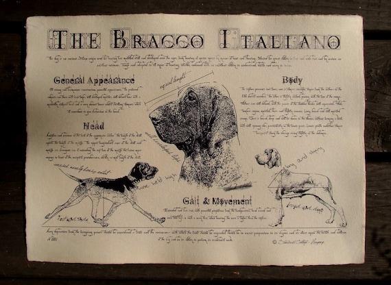 Antique styled dog standard - Bracco Italiano