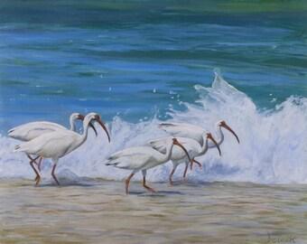 Ibis Walking The Beach