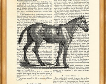 Horse diagram, Vintage Anatomy Drawing DICTIONARY ART PRINT on Vintage Dictionary Page 8'' x 10'' from up-cycled book