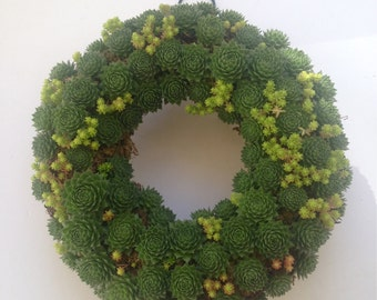 "10"" Living Succulent Wreath"