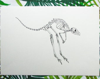 kangaroo Skeleton A3 Handmade Drawing