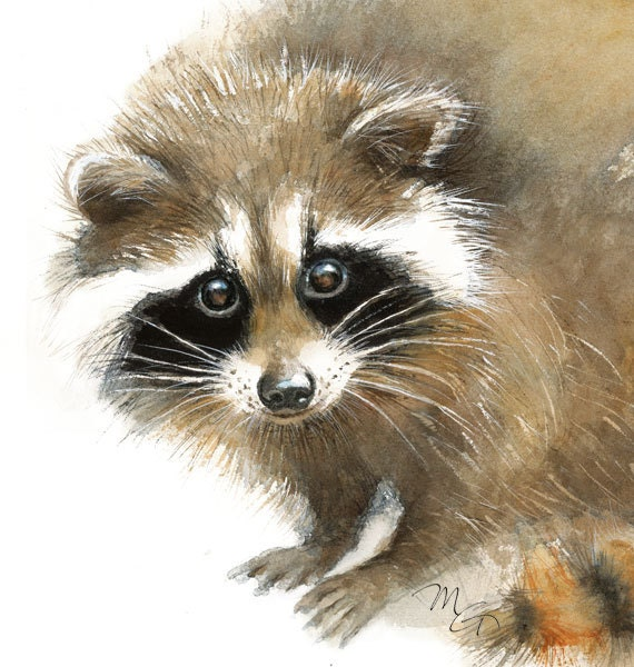 Raccoon watercolor Baby Raccoon Painting Art Print Home Raccoon Painting