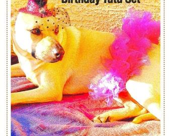 Dog Clothing, pet clothing, Pet Birthday, Dog Tutu, Pet Tutu, Dog Outfit. Dog birthday, tutu set
