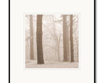 Virginia landscape photography, framed black and white photography, Blue Ridge Parkway Photography, trees in fog, sepia prints, foggy trees